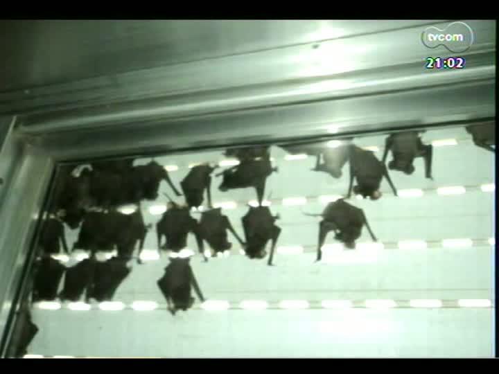 TVCOM Tudo Mais - O que fazer quando morcegos aparecem em casa?