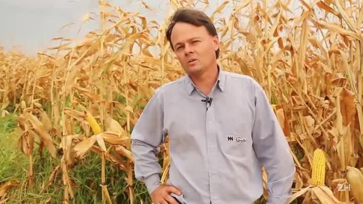 Safra de milho é colhida com bom rendimento e alta de preço