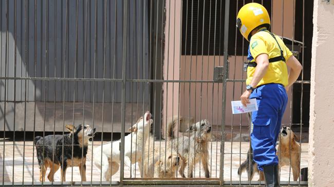 Carteiros são atacados por cães em Viamão