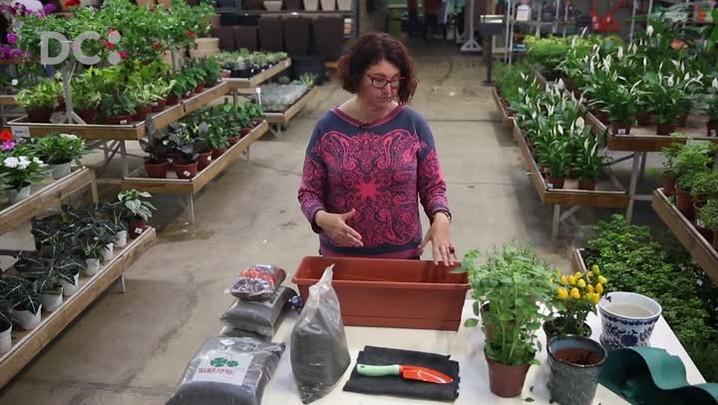 How to DC: aprenda a fazer uma horta caseira