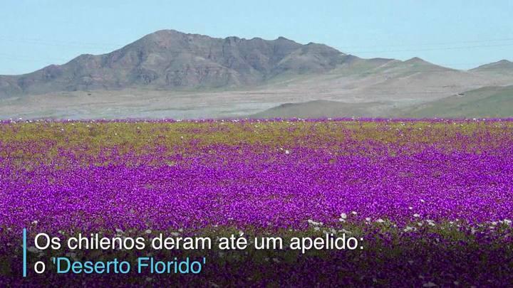Atacama, o Deserto Florido