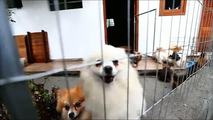 Amigo cão
