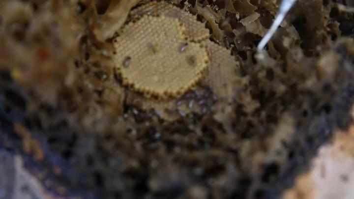 Como criar abelhas sem ferrão