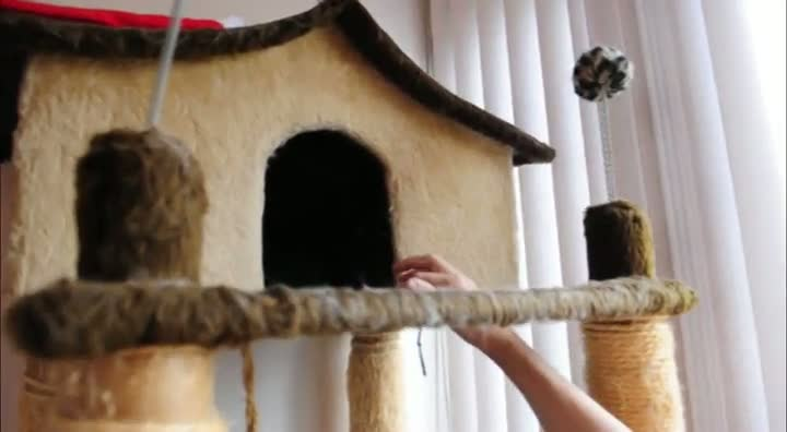 Conheça o trabalho de uma pet sitter, profissional que cuida de animais na ausência dos donos