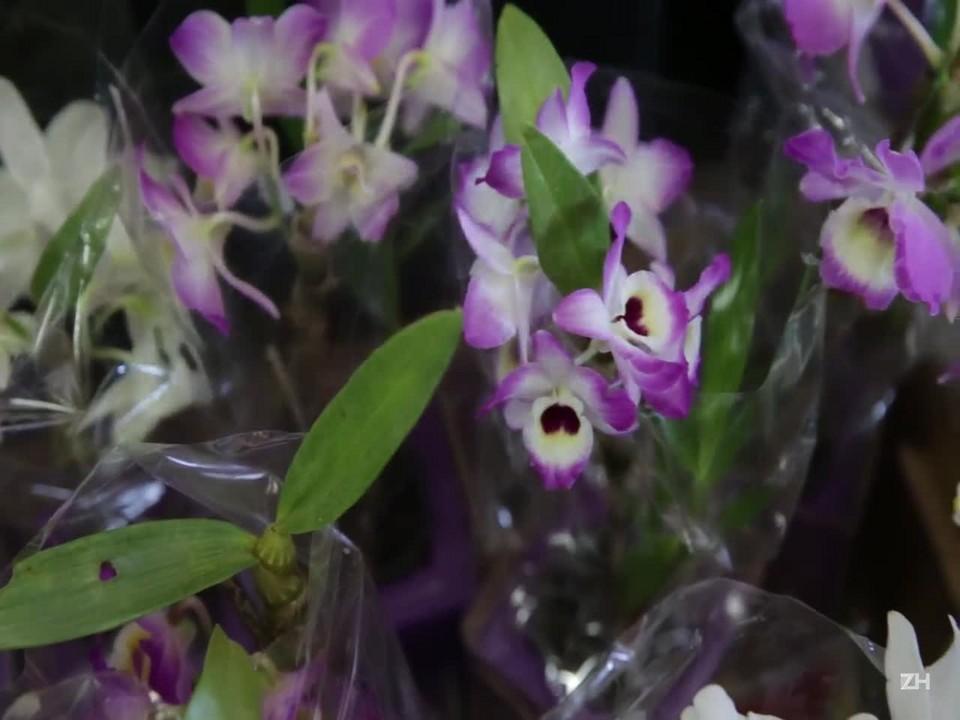 Orquídeas mais duráveis