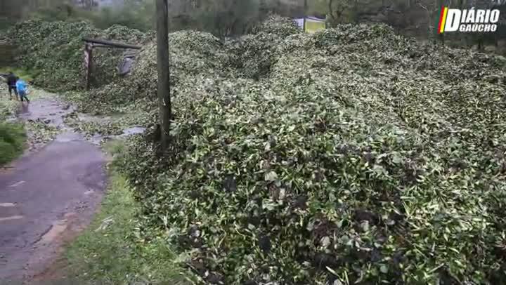Plantas aquáticas deixam rastro de destruição na Vila dos Herdeiros