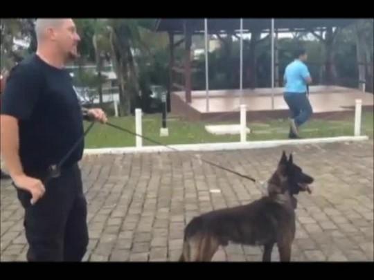 Veja como agem os cães treinados para atuar em ocorrências policiais