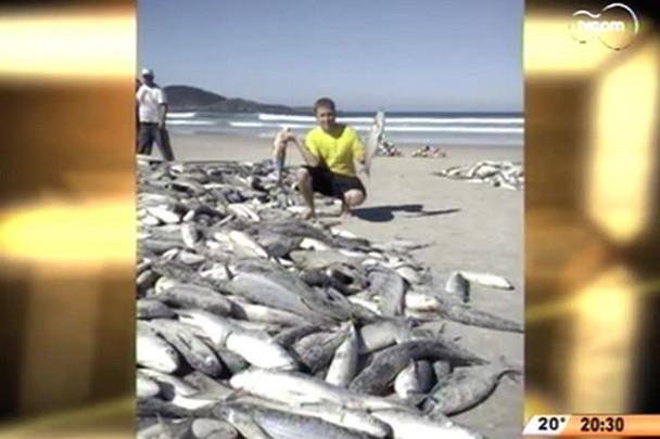 TVCOM 20 Horas - Pescadores capturam 3.400 tainhas na praia do Moçambique - 02.06.15