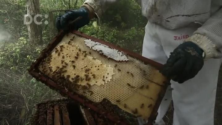 Conheça o processo de produção do mel