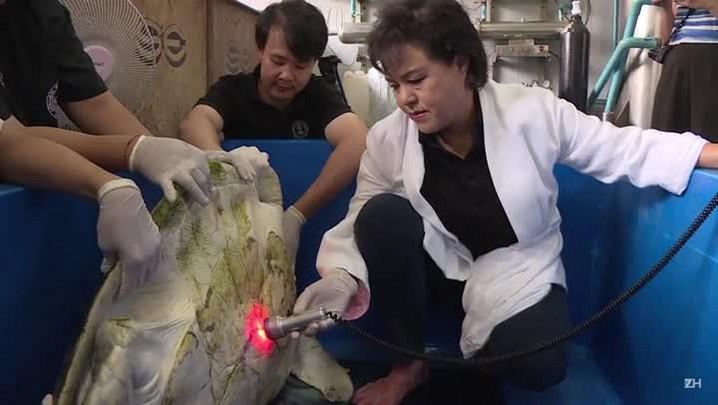 Tartaruga que engoliu 915 moedas faz reabilitação