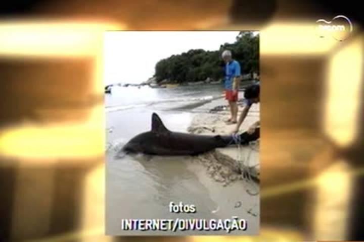 TVCOM 20h - Pescadores capturam tubarão martelo em Palmas - 31.12.14