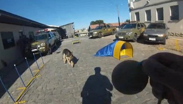 Cão policial especialista em faro faz demonstração de busca a entorpecentes em Caxias