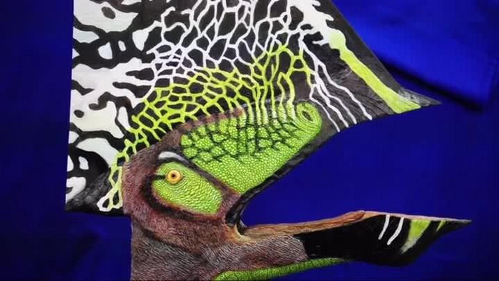 Fósseis descobertos por pesquisadores do Planalto Norte de SC