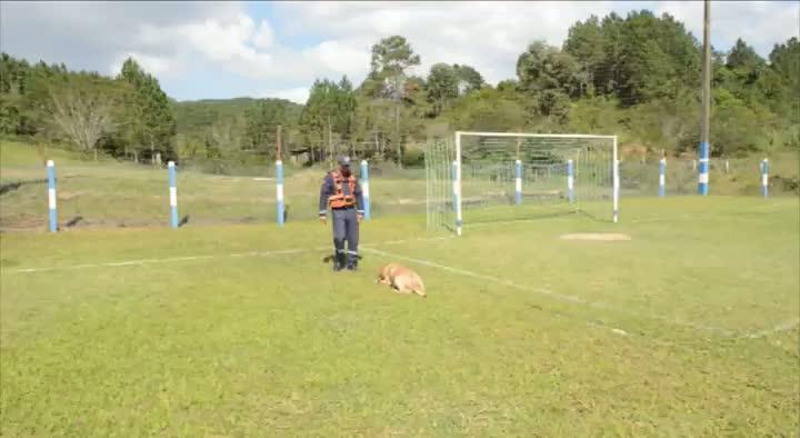 Google, o cão, em adestramento e missão de Busca e Resgate