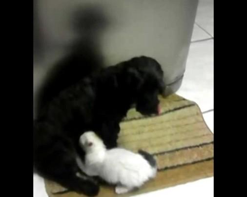 Cadela amamenta gatinho