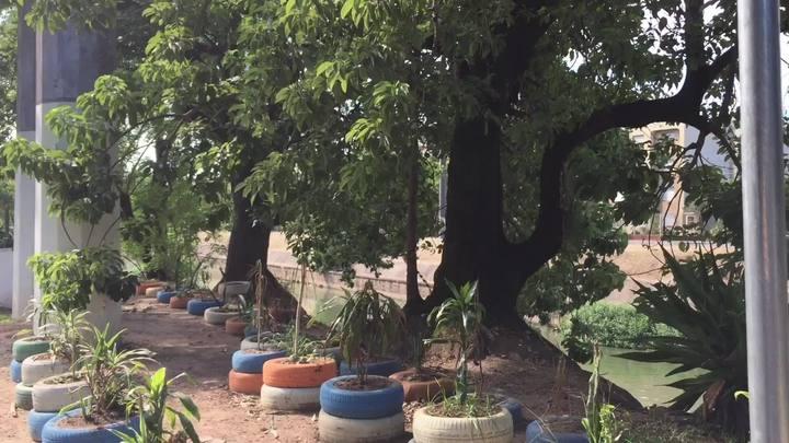 Mudas são plantadas ao lado de ruas para acabar com foco de lixo
