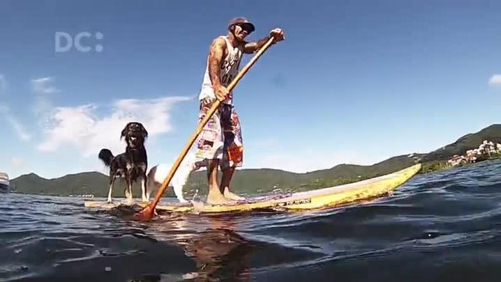 Cachorros fazem stand up paddle na Lagoa da Conceição