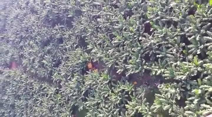 Piloto morre em queda de avião agrícola em Luiz Alves