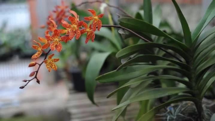 Três dicas para manter suas orquídeas sempre belas