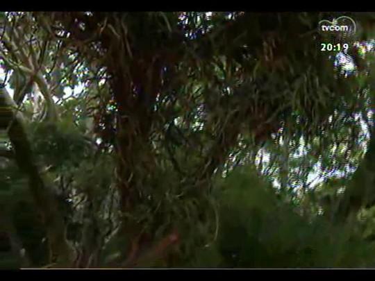 TVCOM 20 Horas - Como está o trabalho de vistoria das árvores da capital? - Bloco 3 - 27/02/2014