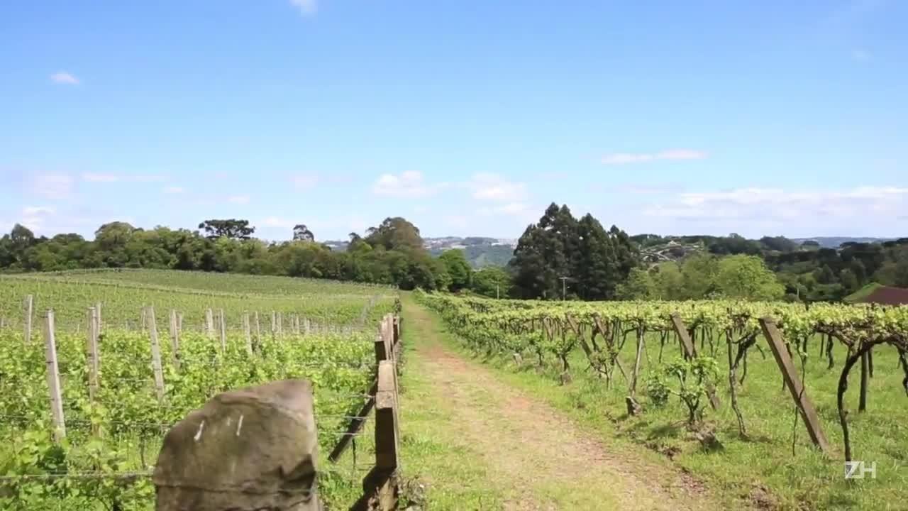 Produtores gaúchos apostam na viticultura biodinâmica