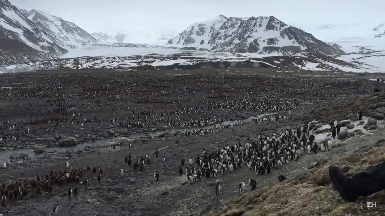 Uma jornada pela Antártica