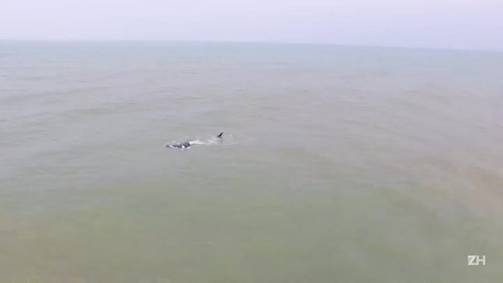 Baleias são avistadas em Capão da Canoa