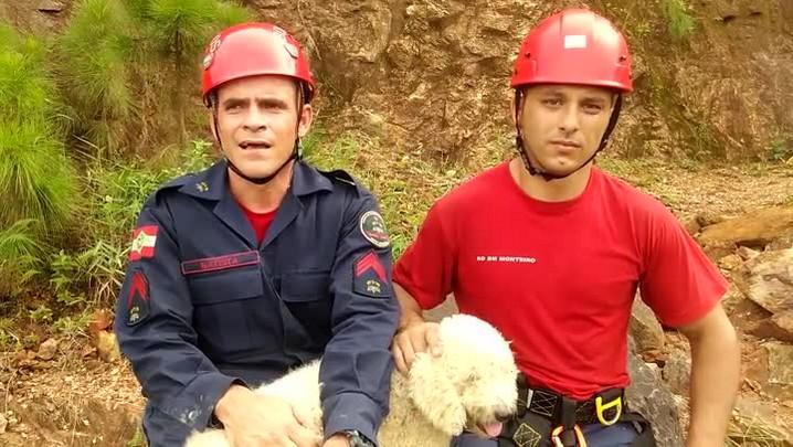 Bombeiros contam como foi resgate de cadelinha em Balneário Camboriú