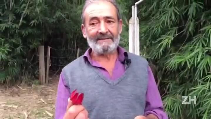 Agricultor de Porto Alegre ensina a fazer semente de hibisco