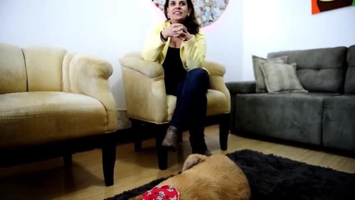 Gorda, a cadela que vivia no Calçadão, completa cinco anos de adotada