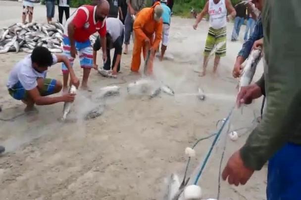 Pesca da Tainha em S�o Francisco do Sul