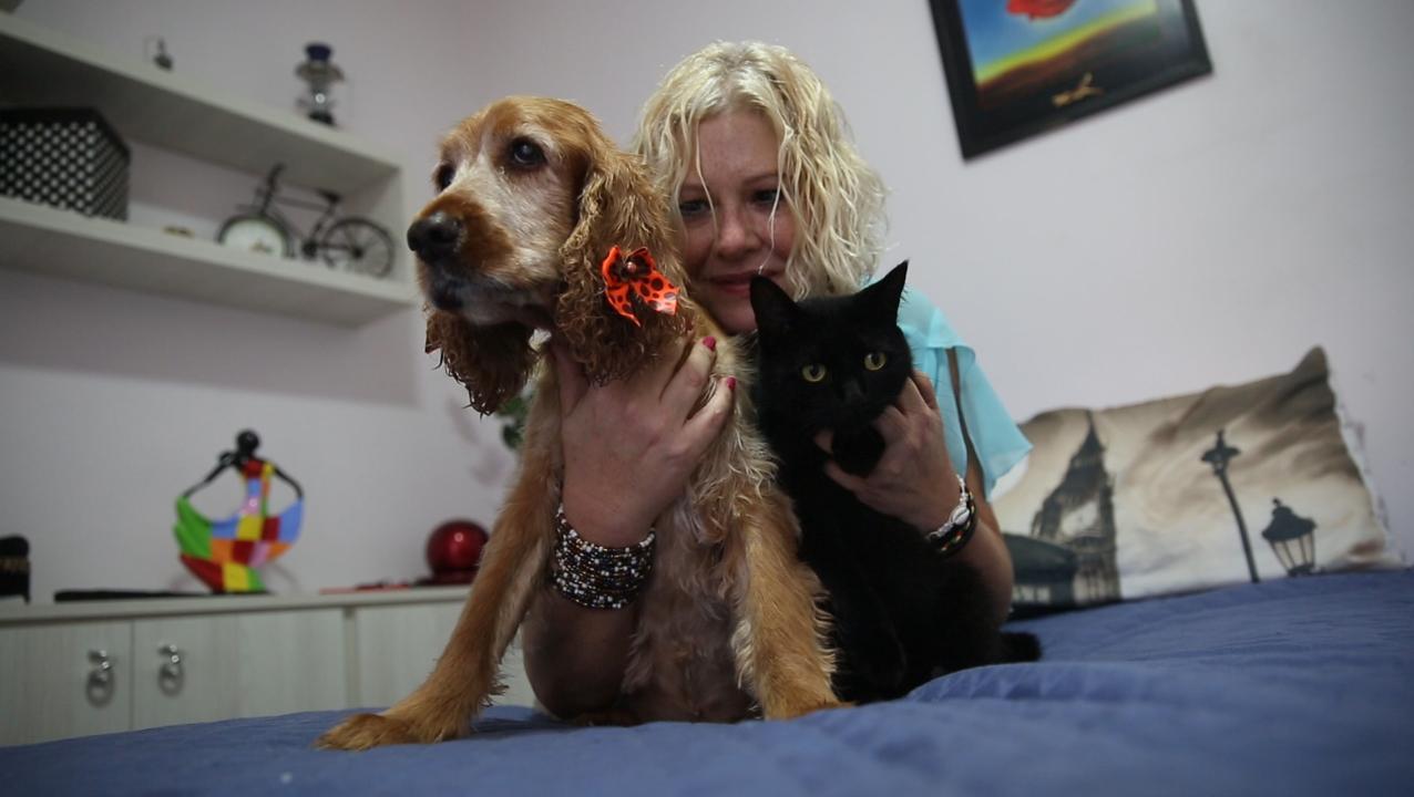 Meu PET no DC: amizade entre cão e gato