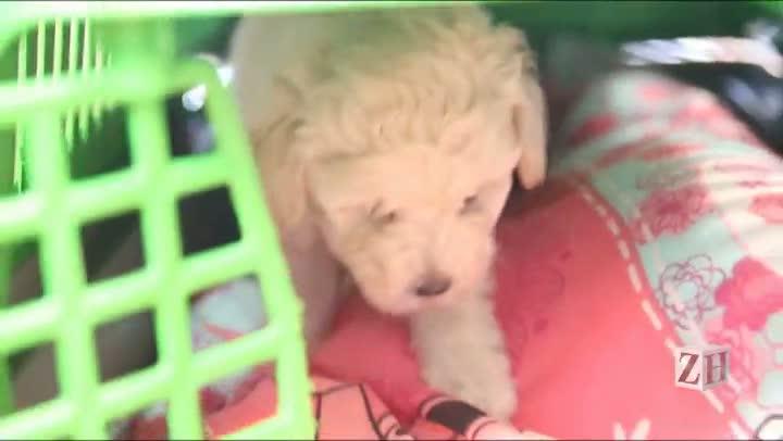 Novo proprietário apresenta cãozinho agredido