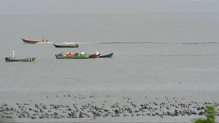 A vida de pescador na baía da Babitonga