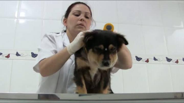 Cadela ferida no pescoço causa comoção nas redes sociais