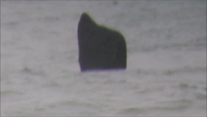 Imagens mostram carinho de baleia com filhote em Cidreira