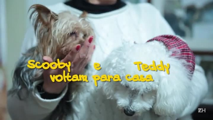 Teddy e Scooby voltam para casa