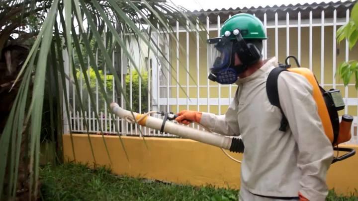 Entenda como o mosquito da dengue se prolifera