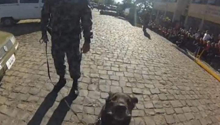 A visão do suspeito e do cão policial durante ação de patrulhamento do canil da BM de Caxias