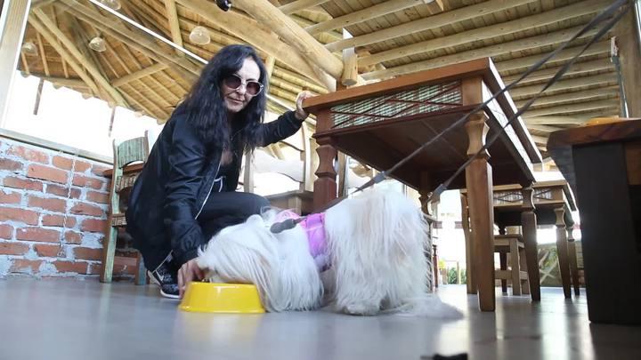 Meu Pet no DC: conheça opções de lugares pet friendly em Florianópolis