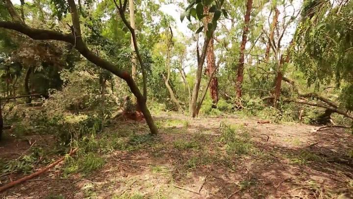 Cemitério verde: o impacto da tempestade nos principais parques da Capital