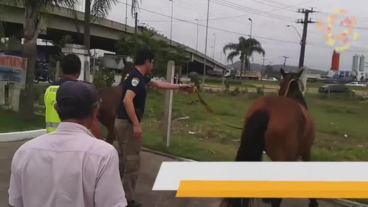 Perigo: cavalos soltos na BR 101
