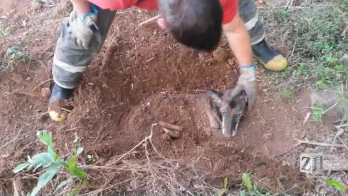 Veja imagens do resgate de cadela enterrada viva