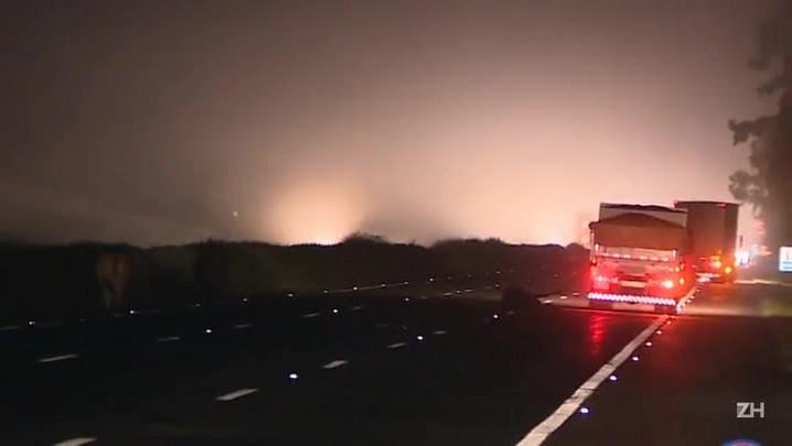 Motorista atropela boi na Freeway