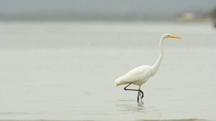 As aves da Babitonga