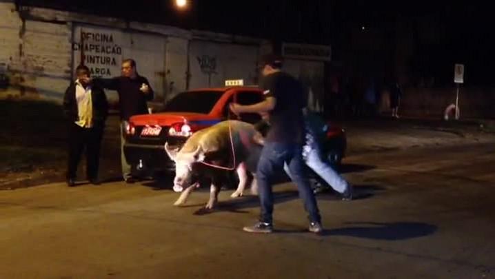 Porco se solta e anda sozinho por avenidas de Porto Alegre - 30/04/2014
