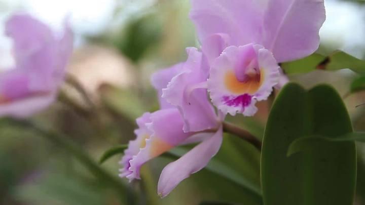Marcelo Vieira Nascimento, 54 anos, conta como nasceu sua paixão por orquídeas