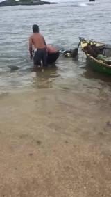 Raia gigante fica presa em barco