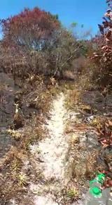 Terceiro incêndio em duas semanas na área de restinga da praia da Joaquina