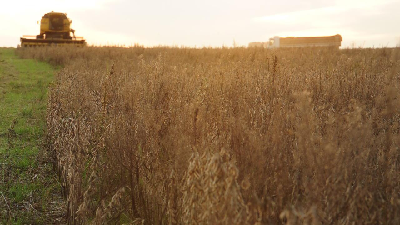 Como a soja transforma a Metade Sul